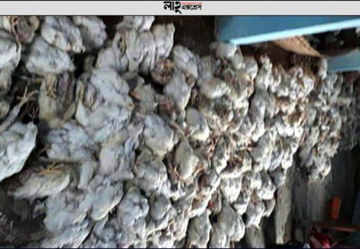 গোলাপগঞ্জে বিদ্যুৎ বিচ্ছিন্নে পোল্ট্রি ব্যবসায়ীর স্বপ্ন ভঙ্গ