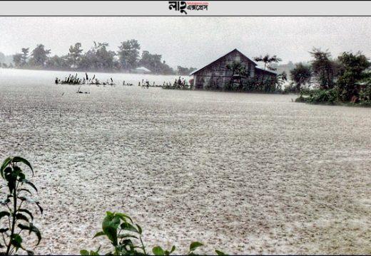 সুনামগঞ্জে ভেসে গেছে ২ কোটি ৬২ লাখ টাকার মাছ