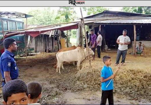 গোলাপগঞ্জে অবৈধ পশুর হাট গুড়িয়ে দিলো উপজেলা প্রশাসন