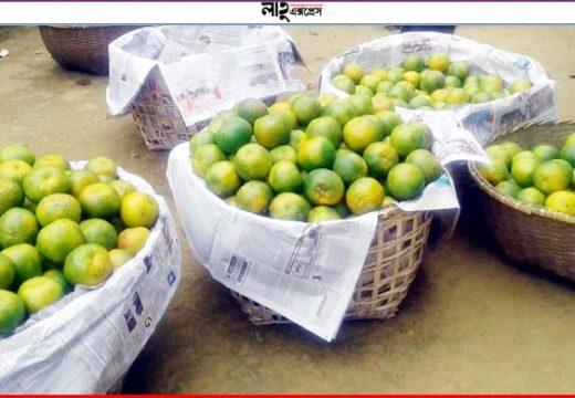মৌলভীবাজারে ১০০ কমলার দাম ২০০ টাকা!