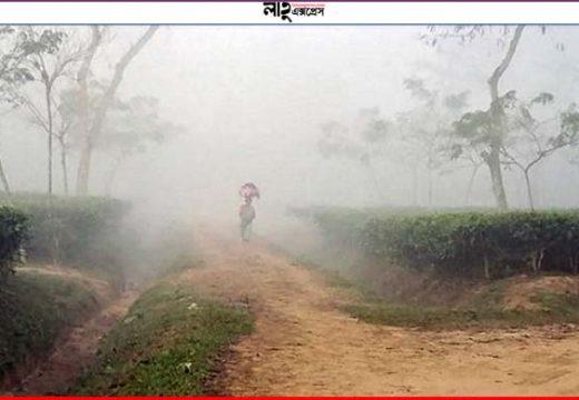 শ্রীমঙ্গলসহ বিভিন্ন অঞ্চলে বয়ে চলা শৈত্যপ্রবাহ অব্যাহত থাকবে