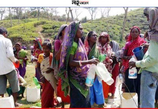 সরকার ঘোষিত ছুটি নেই মৌলভীবাজারের ৯২টি চা বাগানে