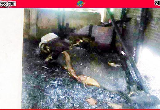 বড়লেখায় দুর্বৃত্তের আগুনে পুড়ে মরলো ৩টি গরু নিজস্ব প্রতিবেদক