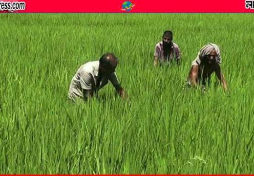 মৌলভীবাজারে 'অতিবৃষ্টির আশীর্বাদ'