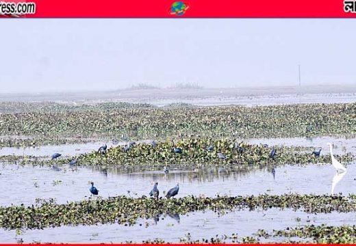 মৌলভীবাজারের বাইক্কাবিলে পরিযায়ী পাখিদের ভিড়