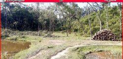 শাহবাজপুরে প্রবাসীর টিলা থেকে জোরপূর্বক গাছ কেটে বিক্রির অভিযোগ