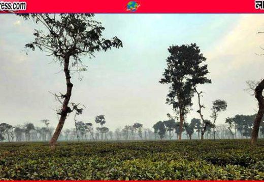 ৩ দিন ধরে দেশের সর্বনিম্ন তাপমাত্রা শ্রীমঙ্গলে
