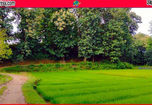 জুড়ীর লাঠিটিলায় হচ্ছে দেশের ৩য় সাফারি পার্ক
